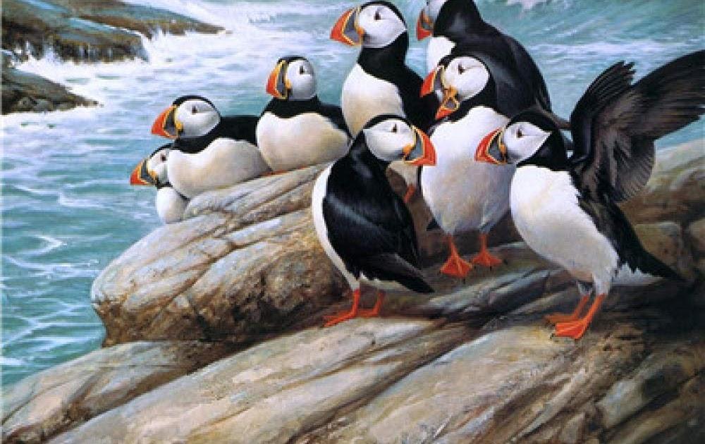 pinguin malen für kinder  tier malen