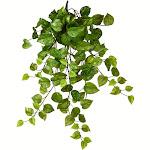 """28"""" Green Pothos Leaf Hanging Bush"""