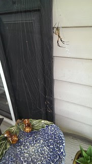 Awesome spider on our front porch