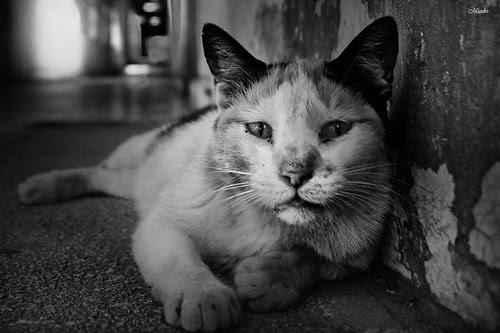El gato del Ex hospital San José by Alejandro Bonilla