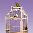 A Beautiful Cage for Cockatiels to Senegals – the Kokee Kondo Convertible Top Bird Cage – Paco Parrot's Blog