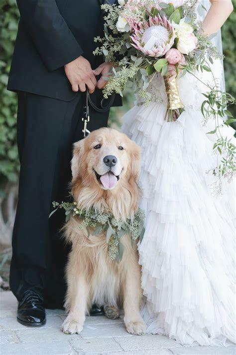 Best 25  Dog wedding ideas on Pinterest   Dog engagement