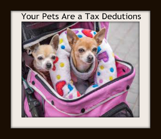 IRS Pays for your Dog Food.