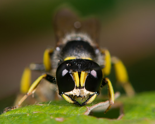 Find Out How to Get Rid of Ground Digger Wasps Around Your Home | Animal Control Specialists