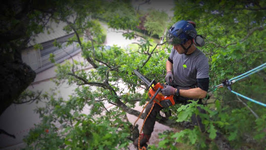 Avalon trees  - tree surgeons in Hertfordshire, Bedfordshire and Buckinghamshire