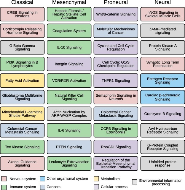 Top-ranked pathways for different GBM subtypes.
