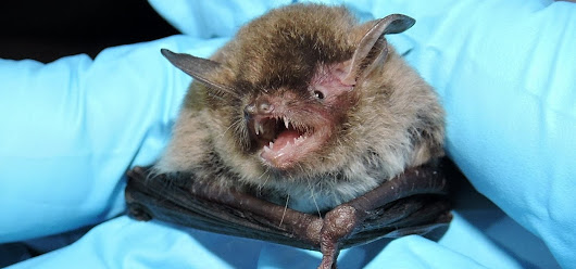 News: Bad News for Bats — Deadly Fungus Spreading This Summer