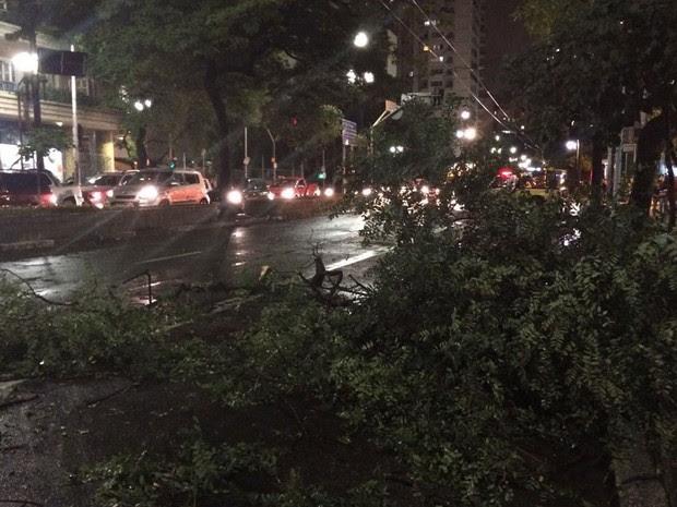 Arvore caída na Rua Maria Paula, no Centro de São Paulo (Foto: Roney Domingos/G1)