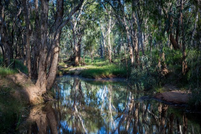 The Doongmabulla Springs is an artesian springs complex in central north Queensland