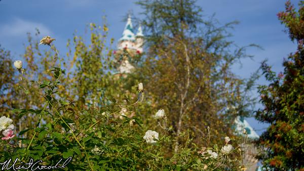 Disneyland Resort, Disneyland, Sleeping Beauty Castle, Rose, Flower