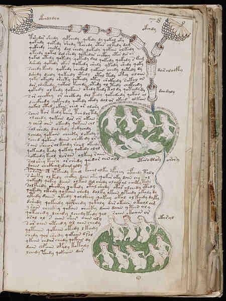 Folio de la sección biológica