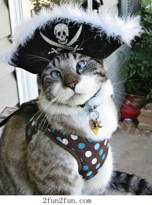 Γατα... πειρατης!