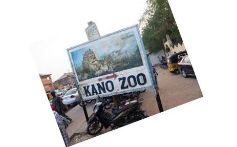 Gorilla Swallows N6.8M In Kano Zoo