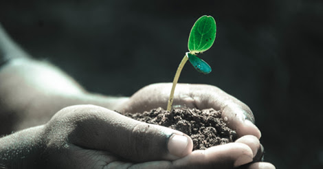 plant-me-002
