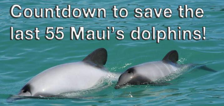 Τα μικρότερα δελφίνια στον κόσμο Maui, είδος υπό εξαφάνιση