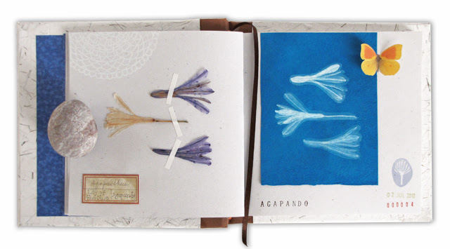 Agapanthus pages