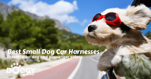 Best Small Dog Car Harness Reviews (2017)