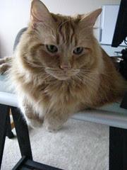 Jasper watching from the desk
