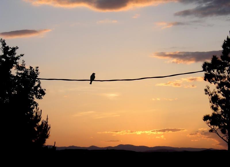 Αποτέλεσμα εικόνας για bird on the wire