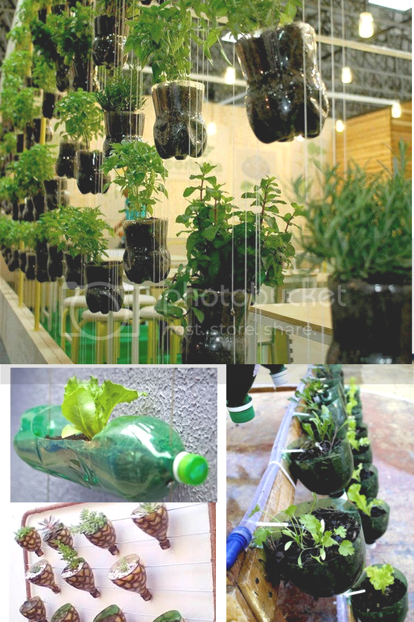 photo Plants2.png