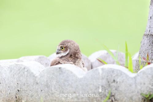 Peeper by Megan Lorenz