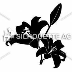 胡蝶蘭シルエット イラストの無料ダウンロードサイトシルエットac