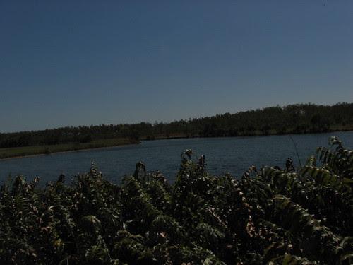 Lake at Palmerston campus, Charles Darwin University