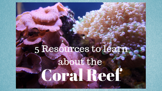 How Much Do Your Learners Know about the Coral Reef? | Knowledge Quest