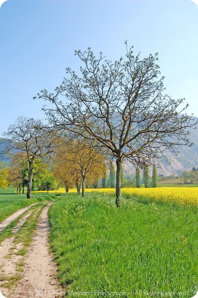 April-May Sierne Trees 1 bis