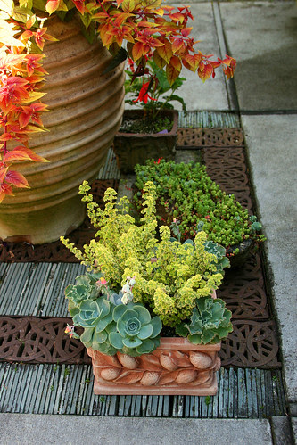 container plants and grating