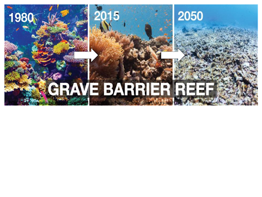 ReviveTheReef (@ReviveTheReef) | Twitter
