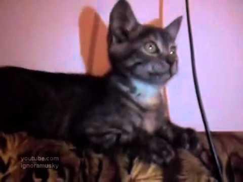 video de un gato que baila al son de la musica