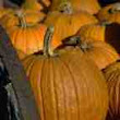 Southwest New Jersey Pumpkin Patches, Corn Mazes, Hayrides and More - Find Halloween and Fall Fun!