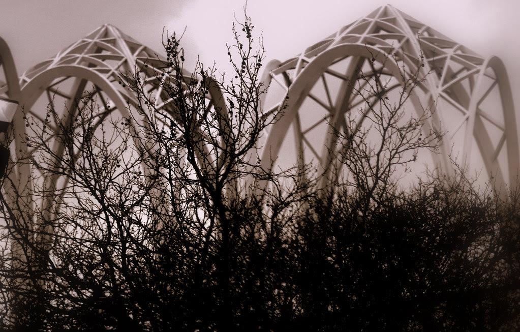 Branches & Arches