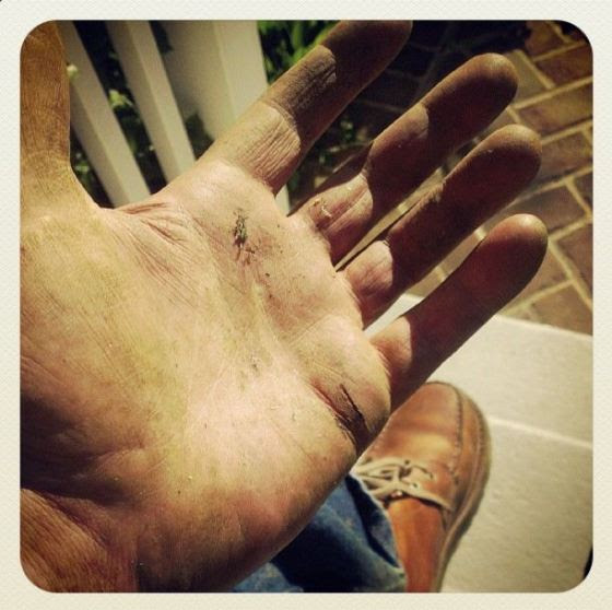 My hand after a weekend's work in the yard