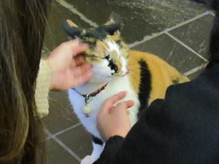 Kitty on Nishiki