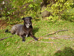 cody raking leaves 006
