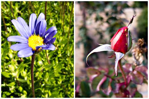 351/365 Las últimas flores del año (díptico) por Juan R. Velasco