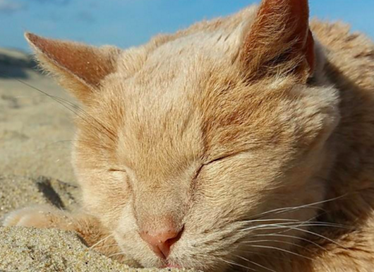 21-year-old rescue cat is making his last years count with a bucket list