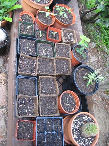 little pots in process