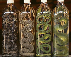 snakewine 1