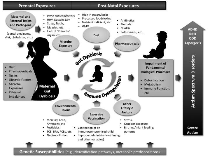 Autism Causal Factors