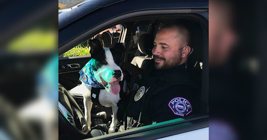 Cops Take Shelter Dogs On Ride-Alongs So They'll Get Adopted