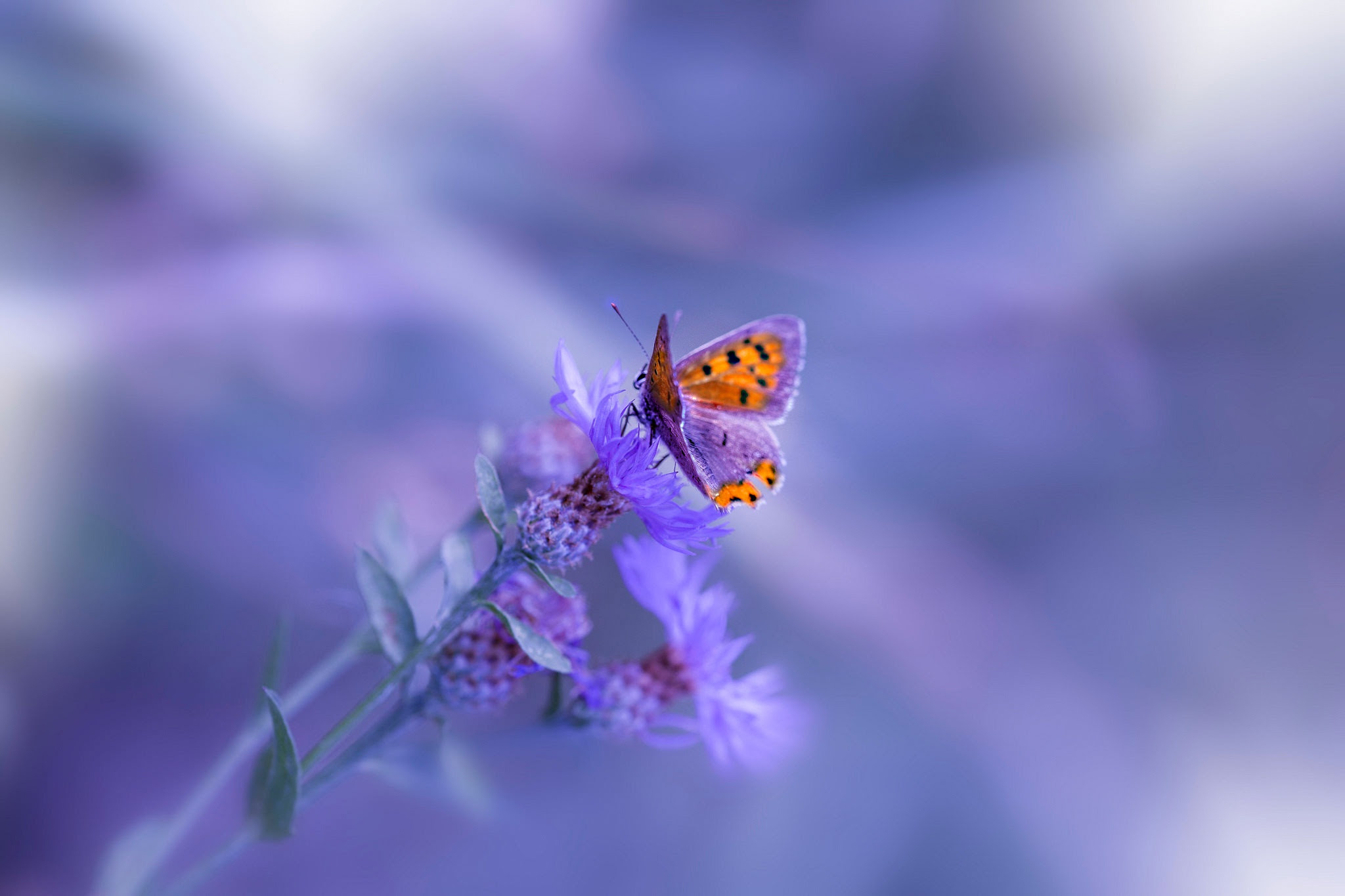 Butterfly Purple Flower, HD Animals, 4k Wallpapers, Images ...
