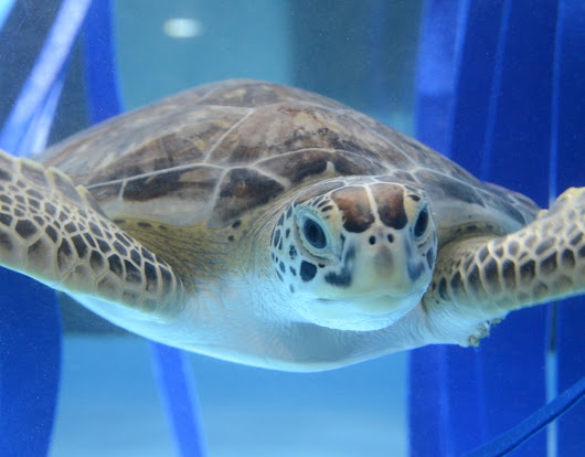 We Have a Crush on Sea Turtles | Peachy the Magazine
