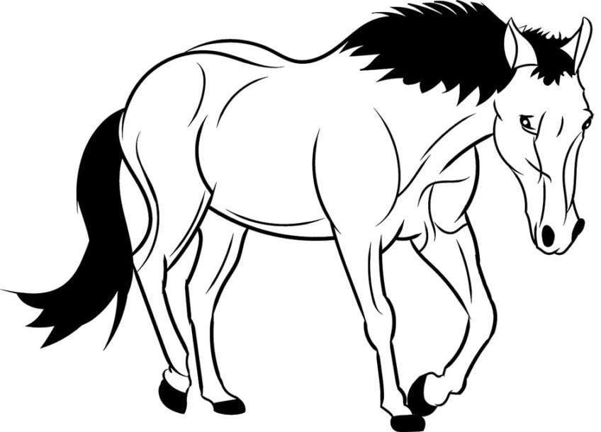 ausmalbilder von pferde  schone ausmalbilder pferde