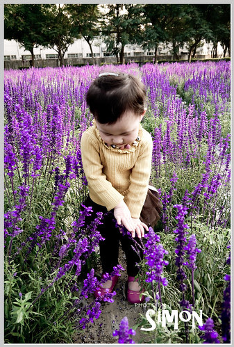 台糖花卉園區07