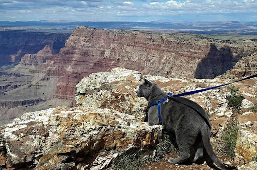 How To Travel With A Cat - Travel Tales of Life