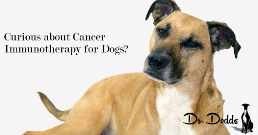 Cancer Immunotherapy for Dogs