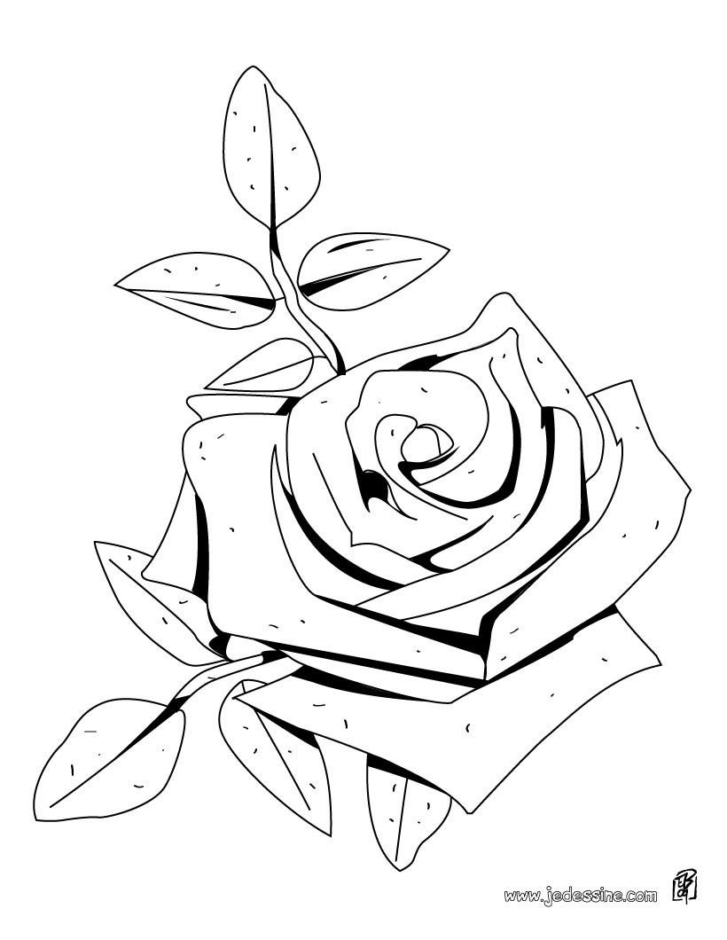 Coloriage d une rose Coloriage Coloriage NATURE Coloriage FLEUR Coloriage ROSE